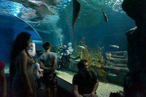 Oceanarium Siam Paragon