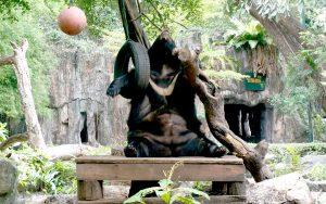zoo dusit